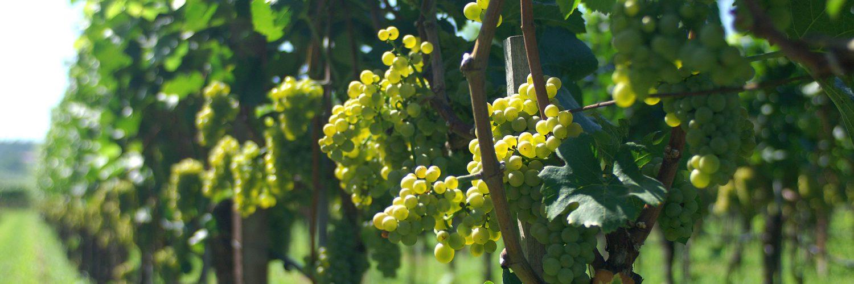 """Weingut """"in der Lamm"""" Südtirol"""