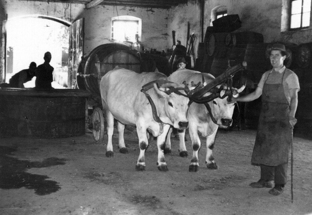 Ochsenfuhrwerk mit Weinfass